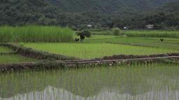 Sapa Vietnam Farmers And Views 2