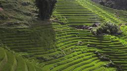 Scenic Vietnamese rice terraces house panorama view of Sapa Vietnam Footage