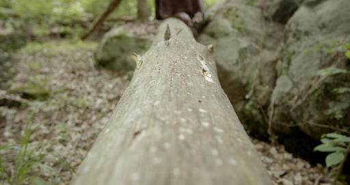 Bare female feet walking on a tree trunk toward the camera - freedom in nature concept Live Action