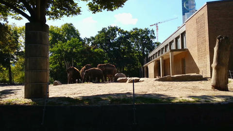 Herd of elephants eating food on sunny summer day. Feeding time in Berlin Zoo Footage