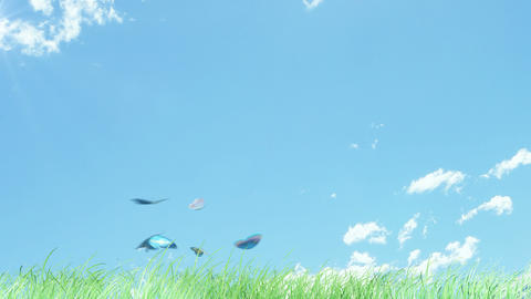 Butterflies are flying on grass Animation