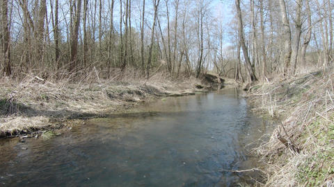 Forest river in early spring Live Action