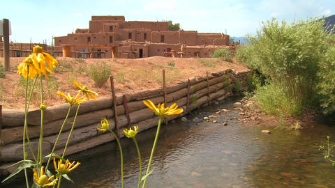 Yellow flowers near the Taos pueblo in New Mexico Footage