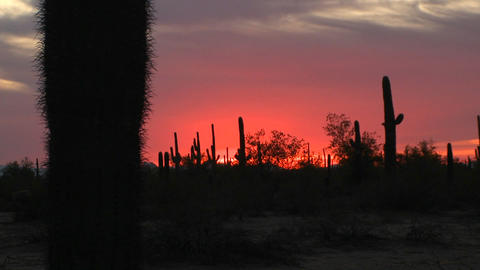 The sun sets in the desert Stock Video Footage
