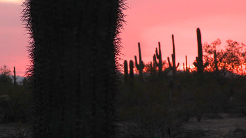 Red desert sunset with a cactus field landscape Stock Video Footage