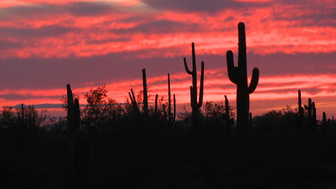 The sun is setting over a field of cactus Live Action