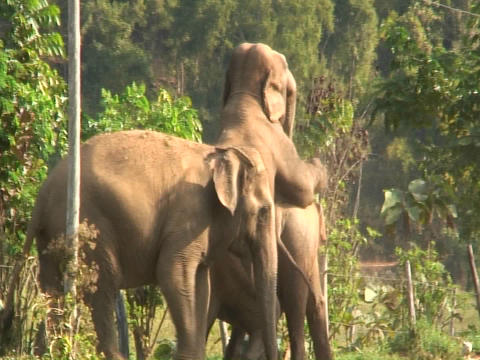 Three elephants in the zoo Stock Video Footage
