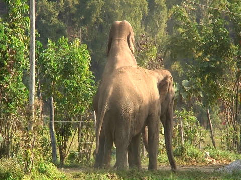 Three elephants in the zoo Footage