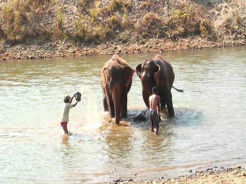 Two men with buckets throw water on a couple of elephants... Stock Video Footage