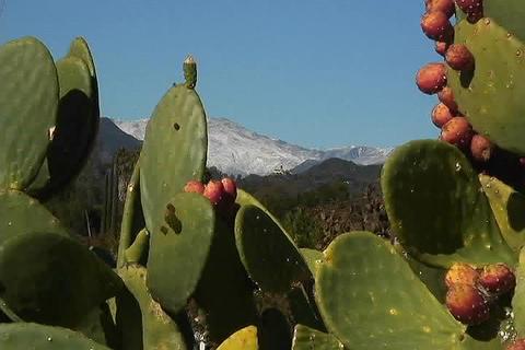 Cactus bathe in bright sun light Stock Video Footage