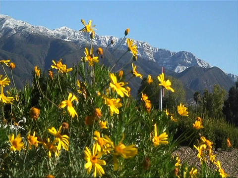Wind blows high mountain flowers Stock Video Footage