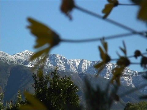 Snow covered mountains are viewed through waving branches Stock Video Footage