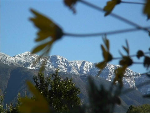 Snow covered mountains are viewed through waving branches Footage