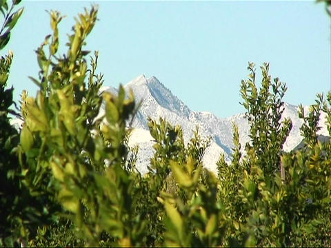 The tops of bushes and trees move with a very slight breeze Stock Video Footage