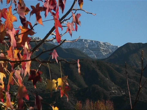 Autumn colored leaves sway in the wind Stock Video Footage