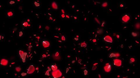 Rose petals falling - loop CG動画