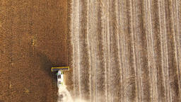 Harvester sunflowers field 4k aerial top view video. Combine cropping copy space Footage