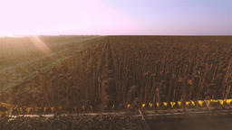 POV view from harvester combine cabin 4k high speed video: sunflowers field Footage