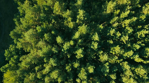 Aerial Vertical View of Tree Tops Green Forest Footage