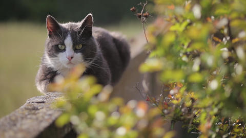 Cute cat immersed in nature Live Action