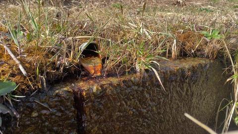 田舎の道端の湧き水と側溝 ライブ動画