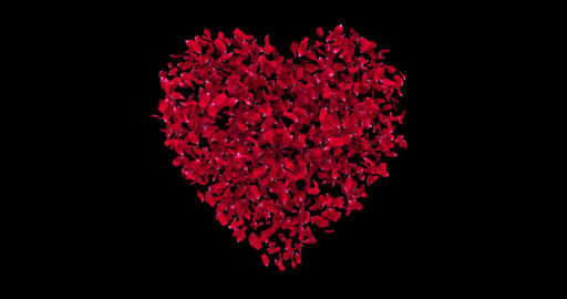 animated of red heart shape of red rose petals, disintegration in red particles on black screen Live Action
