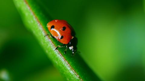 Ladybug 0
