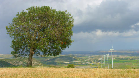 Green tree grows in field, wind turbines spin, beautiful landscape, time-lapse Footage