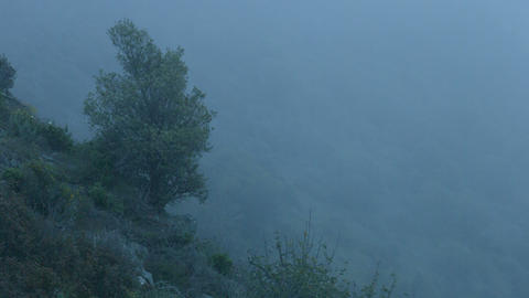 Background for mysterious story, horror film atmosphere, dangerous foggy cliff Footage