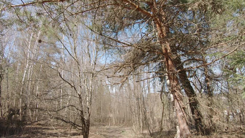 Deciduous forest in early Live Action