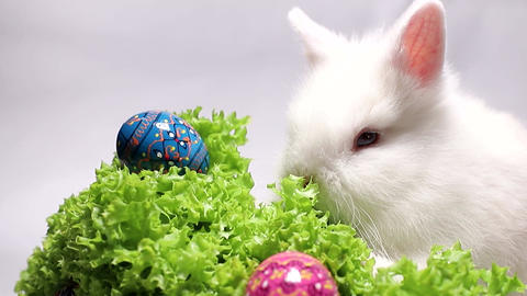 Rabbit on a white background with Easter eggs. On the green grass Easter eggs Live Action