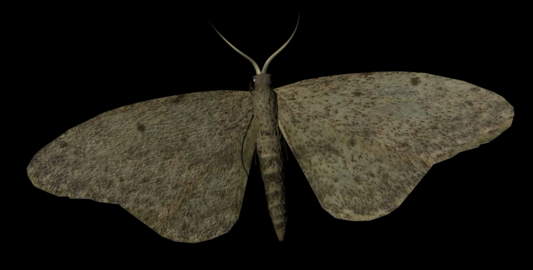 Moth Insect 3Dモデル