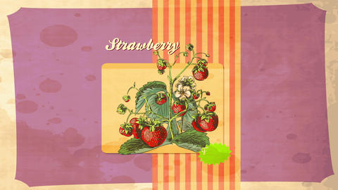 old fruit publicity with climbing plant full of fresh red appetizing little and grown strawberries Animation