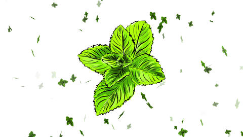healthful fresh mint sprig drawn digitally with pencil strokes and multicolor with unique tones of Animation