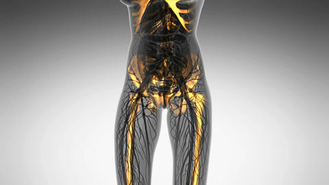 science anatomy of human body in x-ray with glow skeleton bones on white Animation