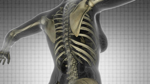 science anatomy scan of human body with skeletal bones on white Animation