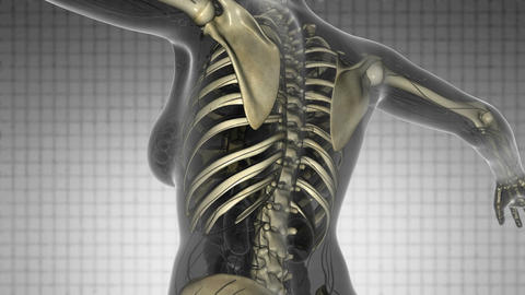 science anatomy scan of human body with skeletal bones on... Stock Video Footage