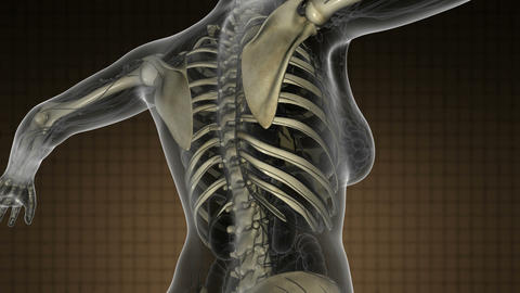science anatomy scan of human body with skeletal bones orange Animation