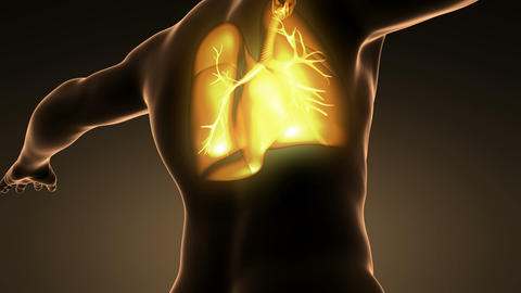 loop science anatomy of man body with glow lungs Animation