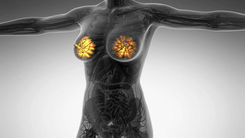 science anatomy of human body in x-ray with glow mammary gland Animation