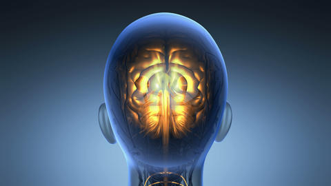 science anatomy of human brain in x-ray on blue Animation