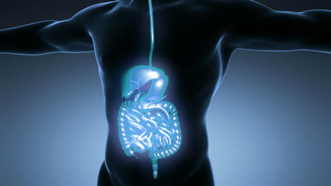 science anatomy of man body with glow digestive system on blue Animation