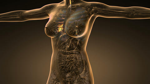 loop science anatomy scan of human lungs glowing with yellow Animation