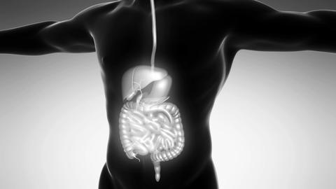 science anatomy of man body with glow digestive system on white Animation