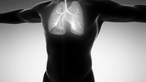 science anatomy of man body with glow lungs on white Animation