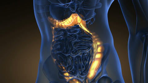 science anatomy scan of human colon glowing with yellow Animation