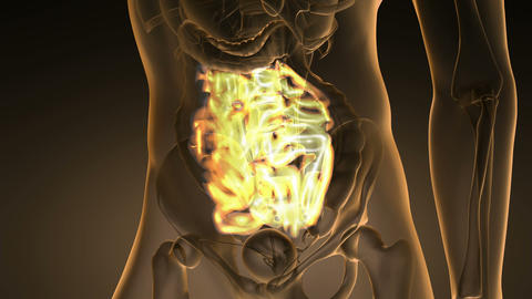 science anatomy scan of human small intestine glowing… Stock Video Footage