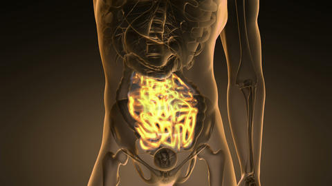 science anatomy scan of human small intestine glowing with yellow Animation