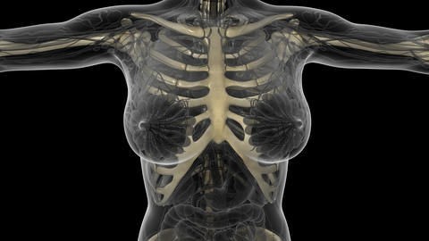 science anatomy scan of human body with skeletal bones.…, Stock Animation