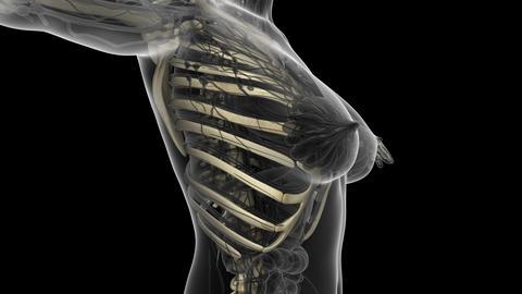 science anatomy scan of human body with skeletal bones.... Stock Video Footage